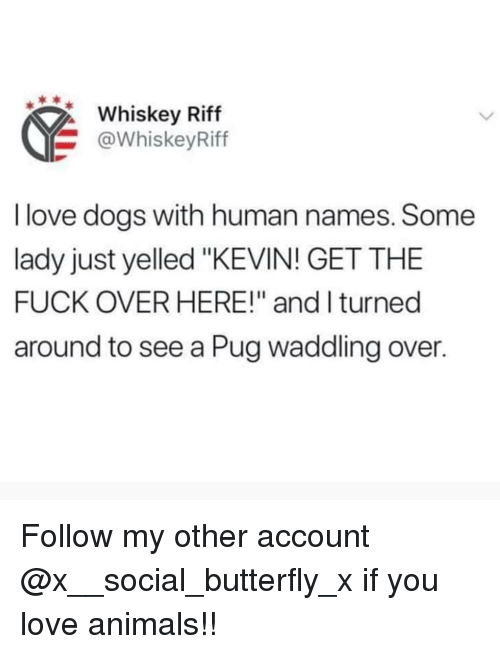 """Animals, Dogs, and Love: Whiskey Riff  @WhiskeyRiff  I love dogs with human names. Some  lady just yelled """"KEVIN! GET THE  FUCK OVER HERE!"""" and I turned  around to see a Pug waddling over. Follow my other account @x__social_butterfly_x if you love animals!!"""