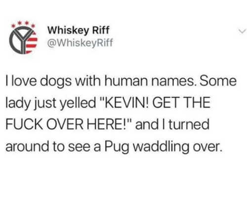 """Dogs, Love, and Fuck: Whiskey Riff  @WhiskeyRiff  I love dogs with human names. Some  lady just yelled """"KEVIN! GET THE  FUCK OVER HERE!"""" and I turned  around to see a Pug waddling over."""