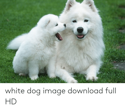 Aww Memes: white dog image download full HD