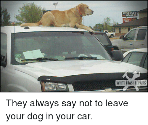 White trash: WHITE TRASH REPAIRS <p>They always say not to leave your dog in your car.</p>