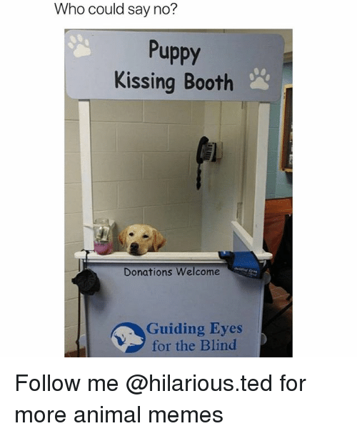 Funny, Memes, and Ted: Who could say no?  Puppy  Kissing Booth  Donations Welcome  Guiding Eyes  for the Blind Follow me @hilarious.ted for more animal memes
