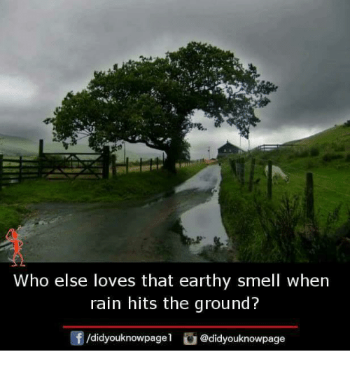 Memes, Smell, and Rain: Who else loves that earthy smell when  rain hits the ground?  didyouknowpage@didyouknowpage