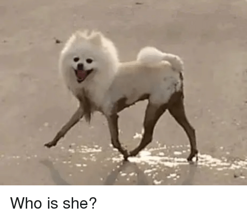 Who, She, and Who Is She: Who is she?
