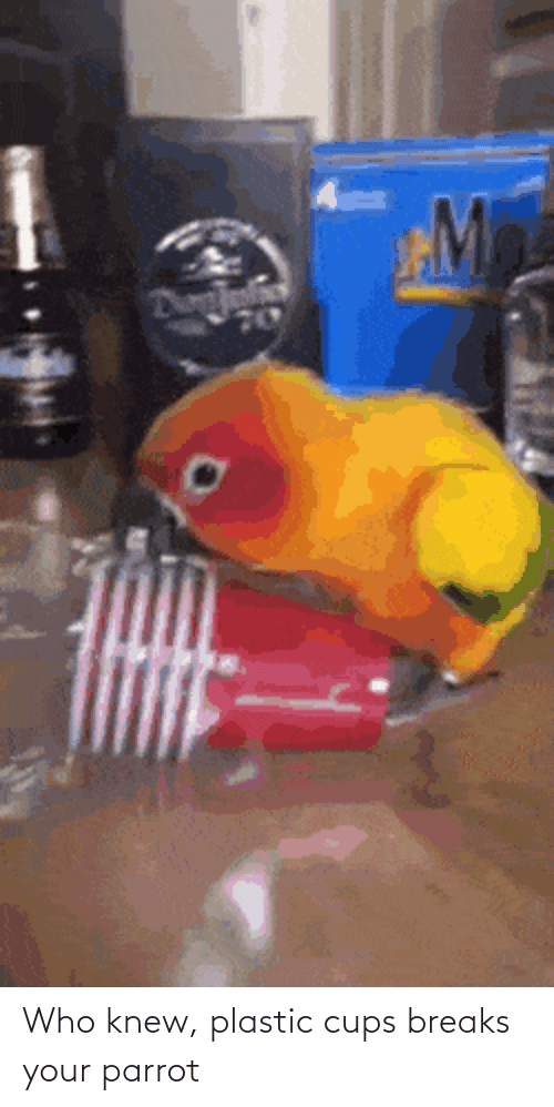 plastic: Who knew, plastic cups breaks your parrot