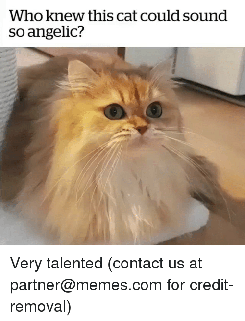 Angelic: Who knew this cat could sound  so angelic? Very talented (contact us at partner@memes.com for credit-removal)