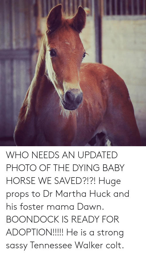 Memes, Dawn, and Horse: WHO NEEDS AN UPDATED PHOTO OF THE DYING BABY HORSE WE SAVED?!?! Huge props to Dr Martha Huck and his foster mama Dawn. BOONDOCK IS READY FOR ADOPTION!!!!! He is a strong sassy Tennessee Walker colt.