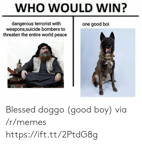 Good Boi: WHO WOULD WIN?  dangerous terrorist with  weapons,suicide bombers to  threaten the entire world peace  one good boi Blessed doggo (good boy) via /r/memes https://ift.tt/2PtdG8g