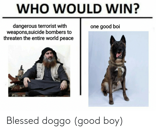 Good Boi: WHO WOULD WIN?  dangerous terrorist with  weapons,suicide bombers to  threaten the entire world peace  one good boi Blessed doggo (good boy)