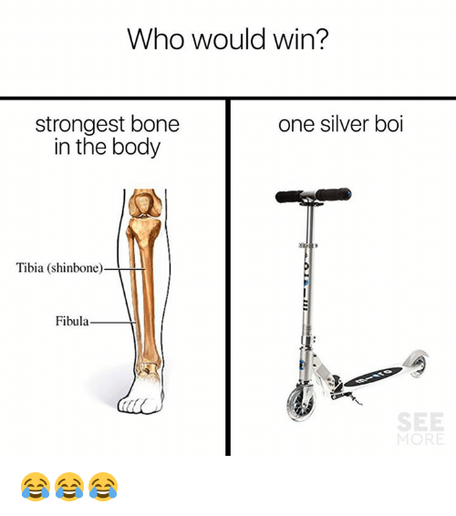 Dank, Silver, and 🤖: Who would win?  one silver boi  strongest bone  in the body  Tibia (shinbone)  Fibula  OR 😂😂😂