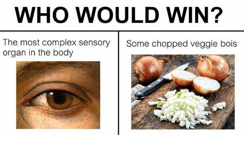 Complex, Classical Art, and Chopped: WHO WOULD WIN?  The most complex sensory  organ in the body  Some chopped veggie bois