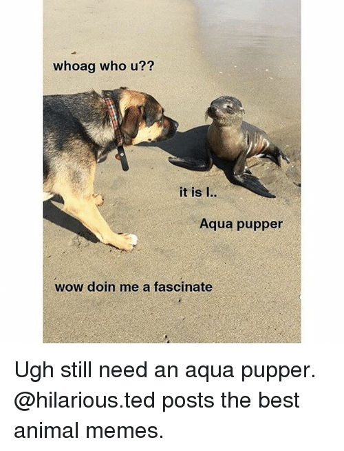 Memes, Ted, and Wow: whoag who u??  it is I..  Aqua pupper  wow doin me a fascinate Ugh still need an aqua pupper. @hilarious.ted posts the best animal memes.