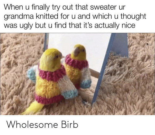 Wholesome: Wholesome Birb