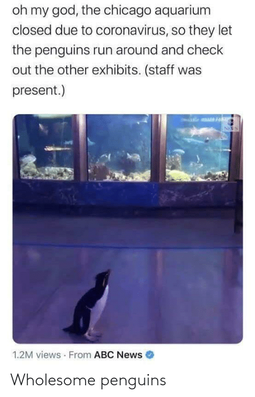 Penguins and Wholesome: Wholesome penguins