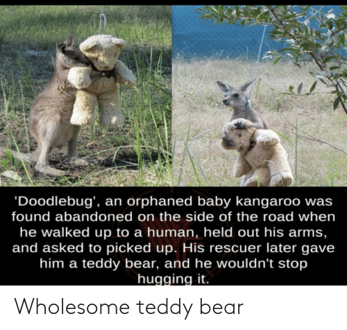 Bear: Wholesome teddy bear