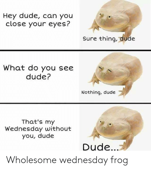 Wholesome: Wholesome wednesday frog