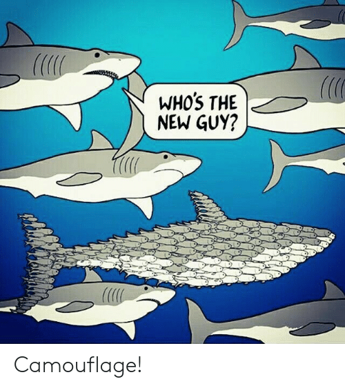 New, The New Guy, and Guy: WHOS THE  NEW GUY? Camouflage!