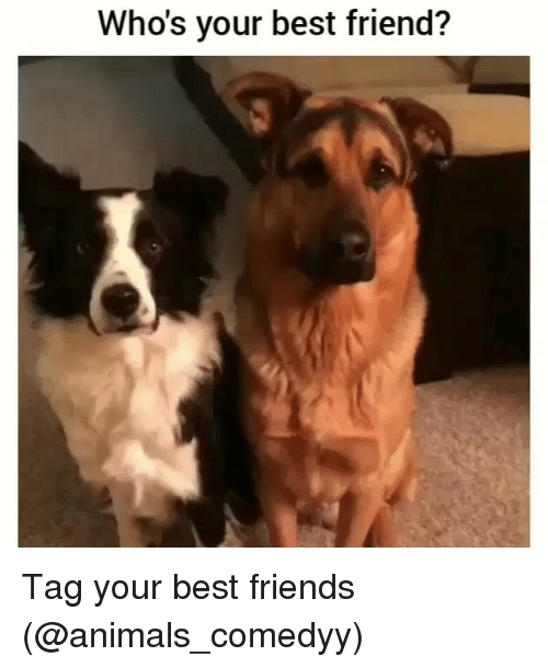 Animals, Best Friend, and Friends: Who's your best friend? Tag your best friends (@animals_comedyy)