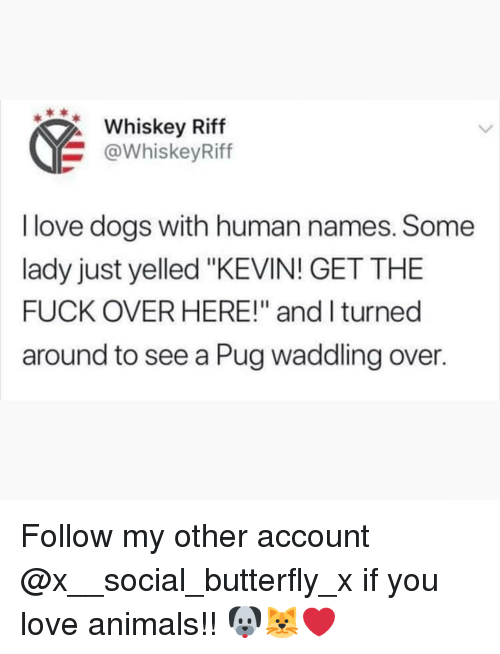 """Love Animals: Whskey Riff  @WhiskeyRiff  I love dogs with human names. Some  lady just yelled """"KEVIN! GET THE  FUCK OVER HERE!"""" and l turned  around to see a Pug waddling over. Follow my other account @x__social_butterfly_x if you love animals!! 🐶🐱❤"""
