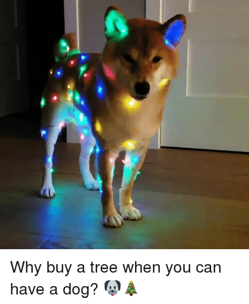Tree, Dog, and Can: Why buy a tree when you can have a dog? 🐶🎄