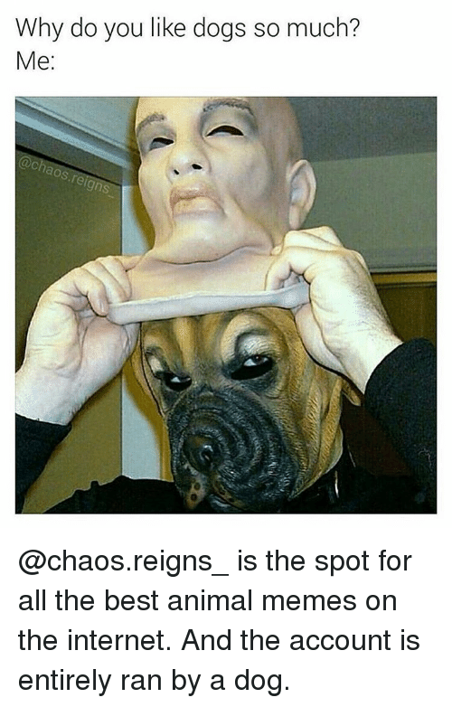 Animals Meme: Why do you like dogs so much?  Me  aos reign @chaos.reigns_ is the spot for all the best animal memes on the internet. And the account is entirely ran by a dog.