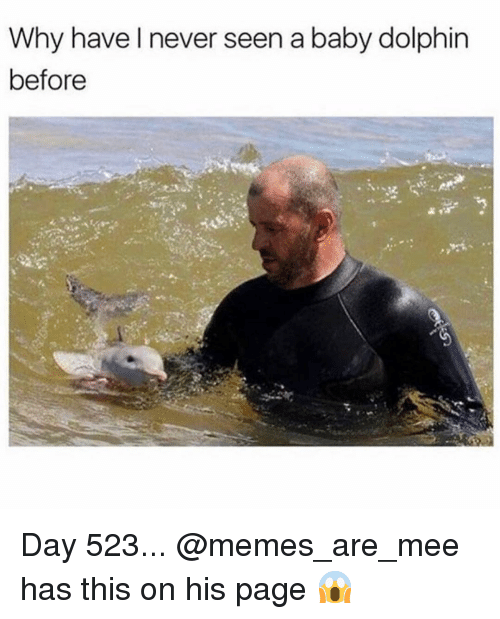 Memes, Dolphin, and Girl Memes: Why have l never seen a baby dolphin  before Day 523... @memes_are_mee has this on his page 😱