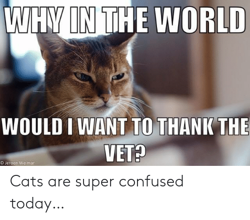Cats Are: WHY IN THE WORLD  WOULD I WANT TO THANK THE  VET?  OJeroen Weimar Cats are super confused today…