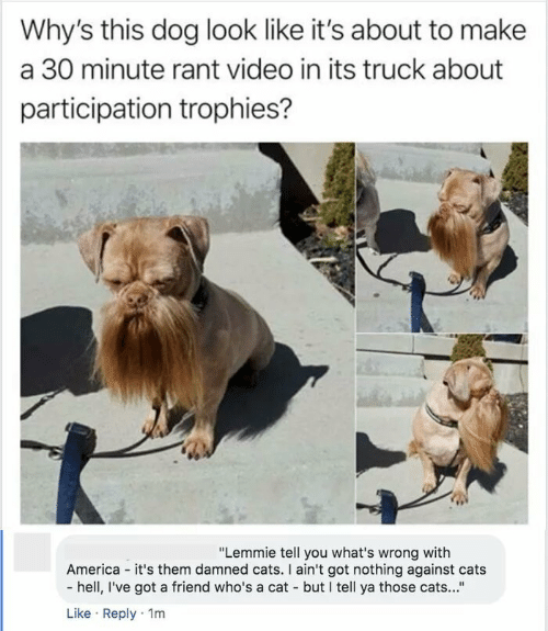 "Ive Got: Why's this dog look like it's about to make  a 30 minute rant video in its truck about  participation trophies?  ""Lemmie tell you what's wrong with  America - it's them damned cats. I ain't got nothing against cats  - hell, I've got a friend who's a cat - but I tell ya those cats...""  Like · Reply · 1m"