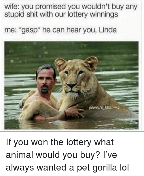 """Funny, Lol, and Lottery: wife: you promised you wouldn't buy any  stupid shit with our lottery winnings  me: """"gasp* he can hear you, Linda  @weird khalees If you won the lottery what animal would you buy? I've always wanted a pet gorilla lol"""