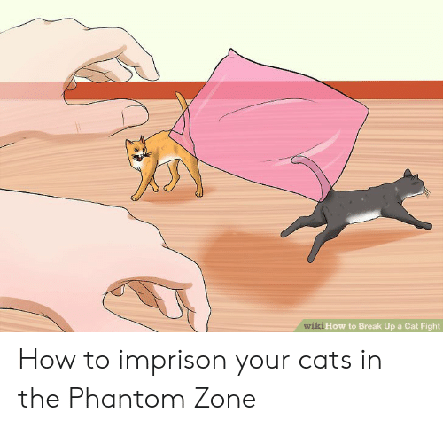 cat fight: wiki How to Break Up a Cat Fight How to imprison your cats in the Phantom Zone