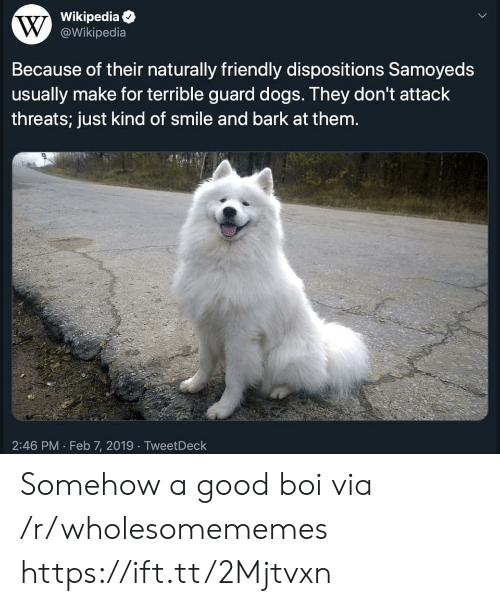 Dogs, Wikipedia, and Good: Wikipedia  W@Wikipedia  Because of their naturally friendly dispositions Samoyeds  usually make for terrible guard dogs. They don't attack  threats; just kind of smile and bark at them.  2:46 PM Feb 7, 2019 TweetDeck Somehow a good boi via /r/wholesomememes https://ift.tt/2Mjtvxn