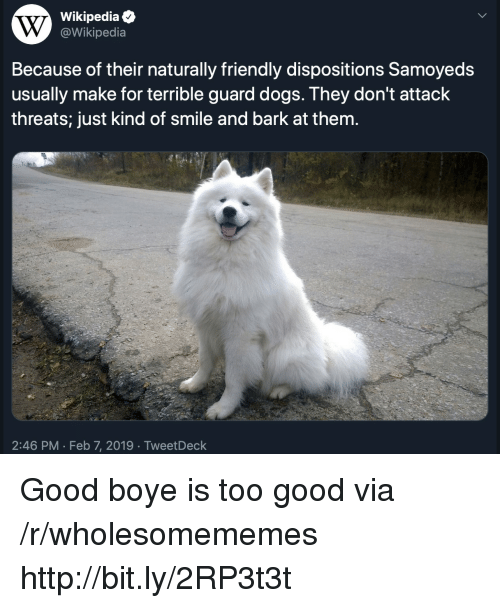 Boye: Wikipediae  @Wikipedia  Because of their naturally friendly dispositions Samoyeds  usually make for terrible guard dogs. They don't attack  threats; just kind of smile and bark at them.  2:46 PM Feb 7, 2019 TweetDeck Good boye is too good via /r/wholesomememes http://bit.ly/2RP3t3t