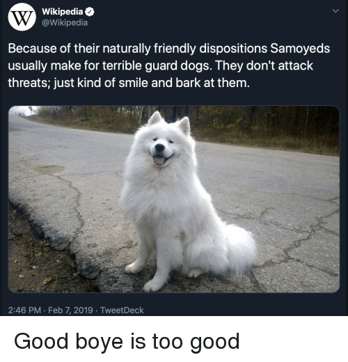 Boye: Wikipediae  @Wikipedia  Because of their naturally friendly dispositions Samoyeds  usually make for terrible guard dogs. They don't attack  threats; just kind of smile and bark at them.  2:46 PM Feb 7, 2019 TweetDeck Good boye is too good
