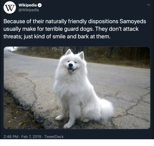 Dogs, Wikipedia, and Smile: Wikipediae  @Wikipedia  Because of their naturally friendly dispositions Samoyeds  usually make for terrible guard dogs. They don't attack  threats; just kind of smile and bark at them.  2:46 PM Feb 7, 2019 TweetDeck