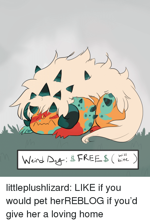 Tumblr, Blog, and Home: will  bite littleplushlizard:  LIKE if you would pet herREBLOG if you'd give her a loving home