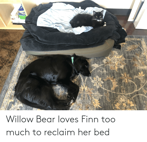 willow: Willow Bear loves Finn too much to reclaim her bed