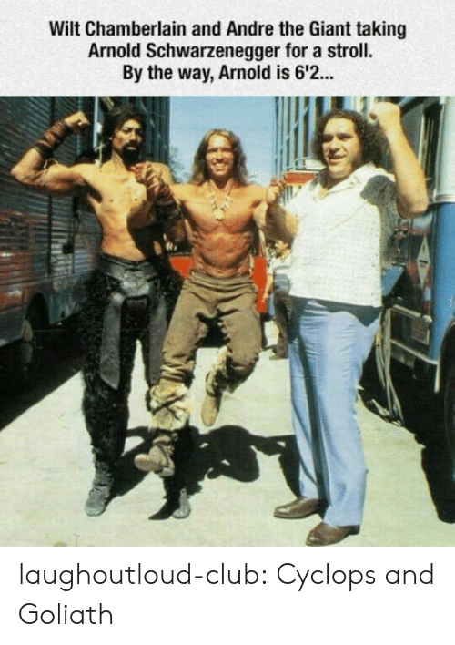 André the Giant, Arnold Schwarzenegger, and Club: Wilt Chamberlain and Andre the Giant taking  Arnold Schwarzenegger for a stroll.  By the way, Arnold is 6'2. laughoutloud-club:  Cyclops and Goliath