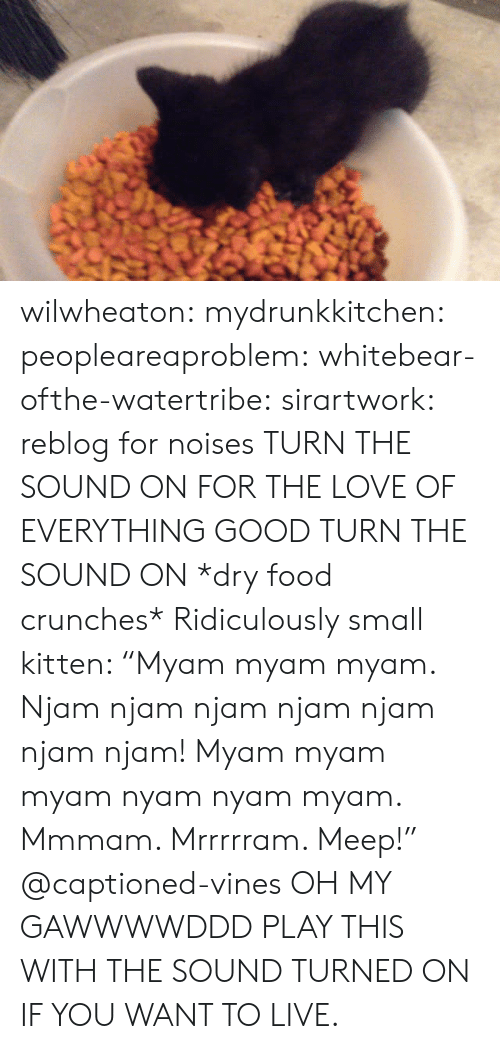 """crunches: wilwheaton: mydrunkkitchen:  peopleareaproblem:  whitebear-ofthe-watertribe:  sirartwork:  reblog for noises  TURN THE SOUND ON FOR THE LOVE OF EVERYTHING GOOD TURN THE SOUND ON   *dry food crunches* Ridiculously small kitten: """"Myam myam myam. Njam njam njam njam njam njam njam! Myam myam myam nyam nyam myam. Mmmam. Mrrrrram. Meep!"""" @captioned-vines   OH MY GAWWWWDDD  PLAY THIS WITH THE SOUND TURNED ON IF YOU WANT TO LIVE."""
