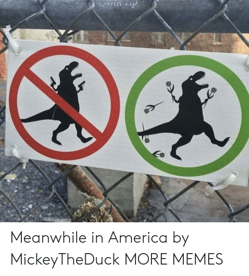 in america: win p Meanwhile in America by MickeyTheDuck MORE MEMES