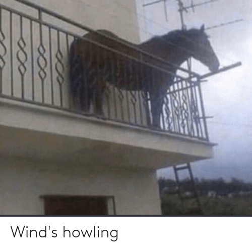 howling: Wind's howling