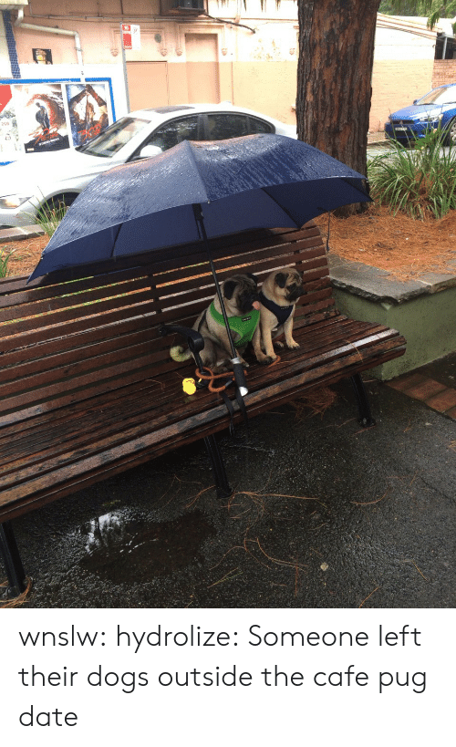 pug: wnslw:  hydrolize:  Someone left their dogs outside the cafe  pug date