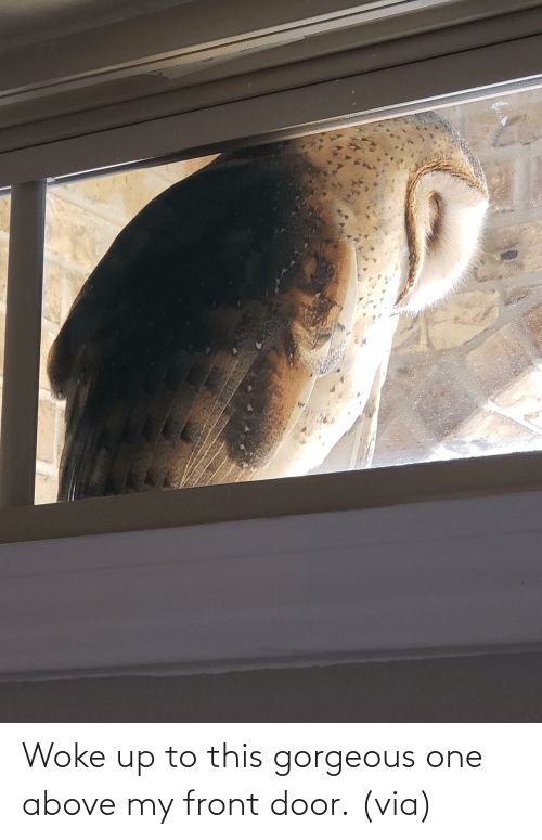 Imgur: Woke up to this gorgeous one above my front door. (via)