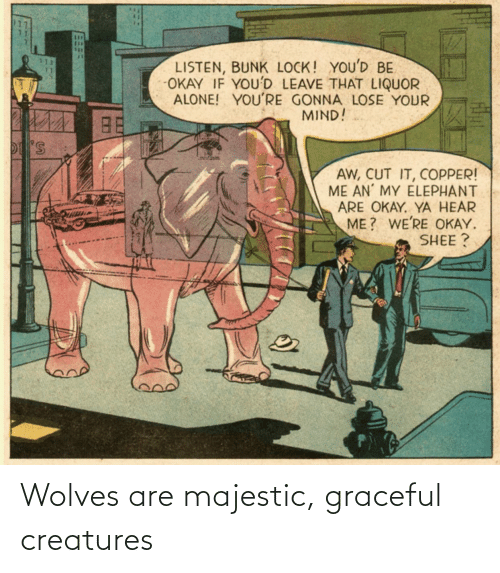 creatures: Wolves are majestic, graceful creatures