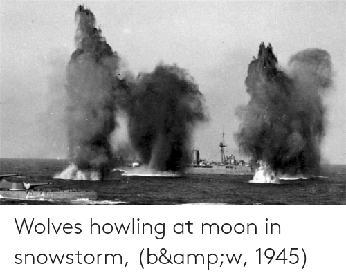 howling: Wolves howling at moon in snowstorm, (b&w, 1945)