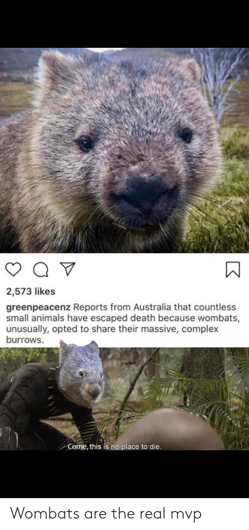 The Real: Wombats are the real mvp