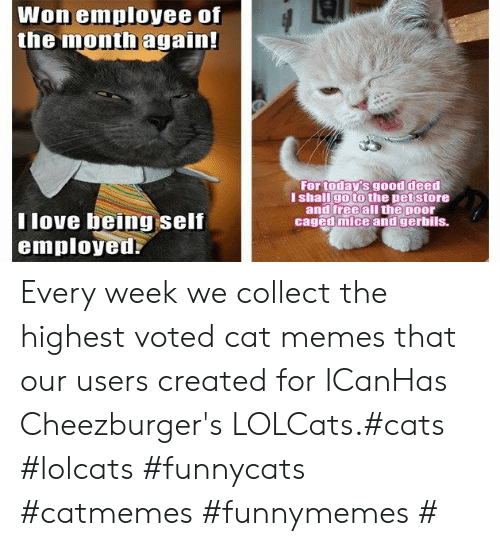 Cat Memes: Won employee of  the month again!  For today's good deed  I shallgo to the pet store  and free all the poor  caged mice and gerbils.  T love being self  employed Every week we collect the highest voted cat memes that our users created for ICanHas Cheezburger's LOLCats.#cats #lolcats #funnycats #catmemes #funnymemes #