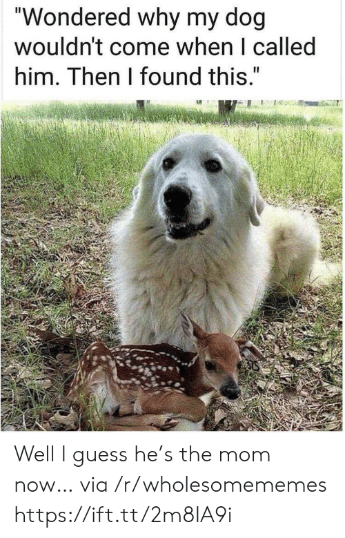 """Guess, Mom, and Dog: """"Wondered why my dog  wouldn't come when I called  him. Then I found this."""" Well I guess he's the mom now… via /r/wholesomememes https://ift.tt/2m8IA9i"""