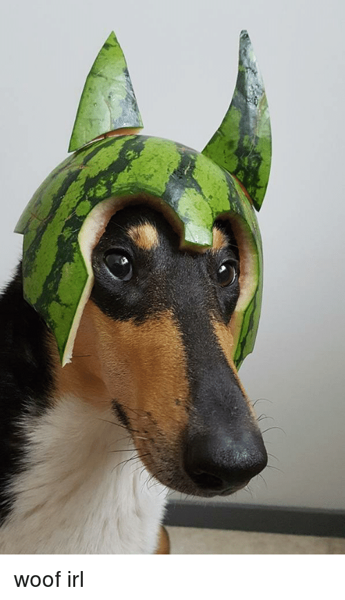 Irl, Dog IRL, and Melon Collie: woof irl