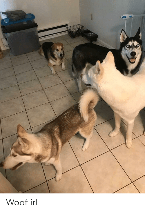 Irl, Dog IRL, and Woof: Woof irl