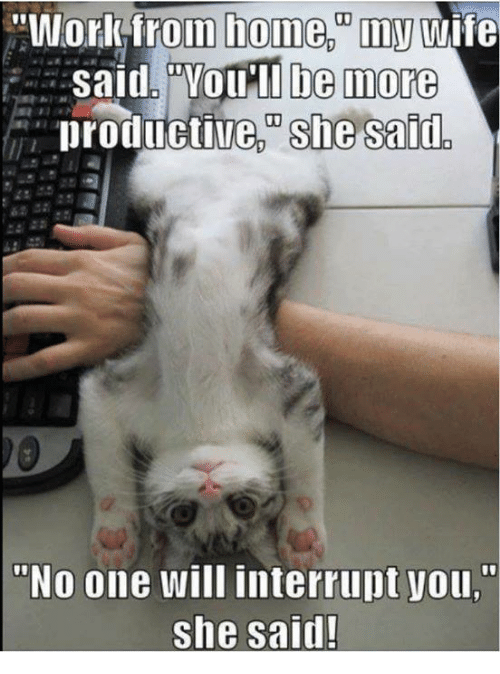 """Memes, Home, and Wife: """"Workfrom wife  said.PYOIMI be inore  productive she said  home, my  """"No one will interrupt you,""""  she said!"""