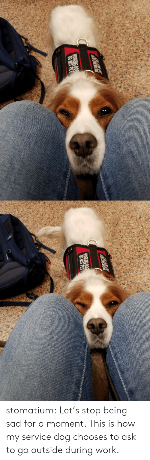 Target, Tumblr, and Work: WORKING DOG  DO NOT PET   WORKING DOG  DO NOT PET stomatium: Let's stop being sad for a moment.   This is how my service dog chooses to ask to go outside during work.